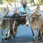 Bullock-cart
